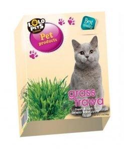 iarba pentru pisici